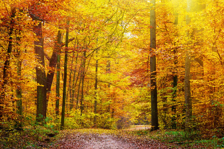 Sonnenstrahlen scheinen in einen herbstlichen Wald.