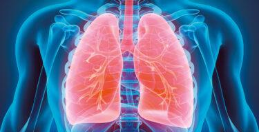 Medizinische 3D-Illustration der Lungen.