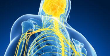 Grafik des menschlichen Nervensystems.